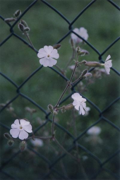 flora_031.jpg