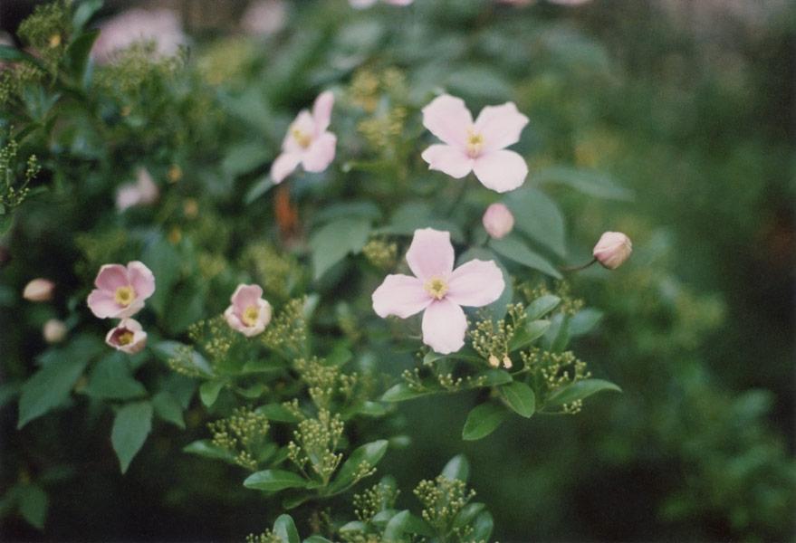 flora_041.jpg