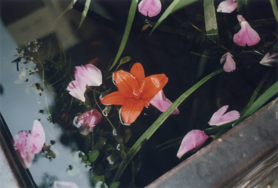 flora_051.jpg