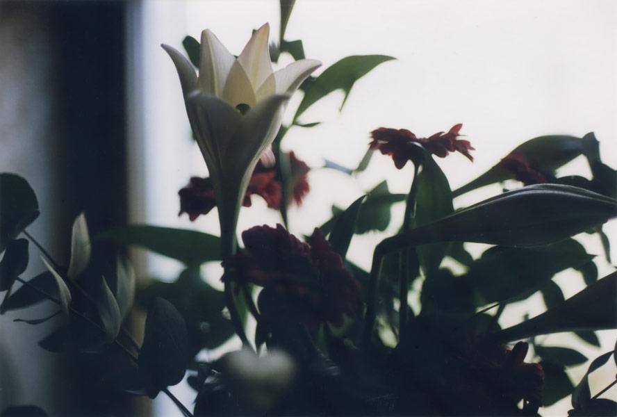 flora_071.jpg