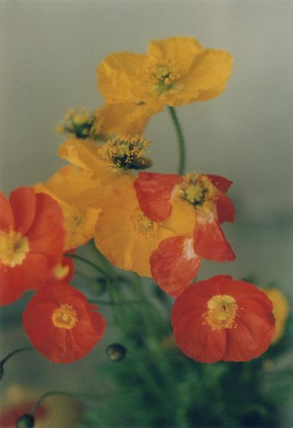 flora_081.jpg