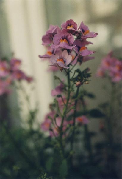 flora_101.jpg