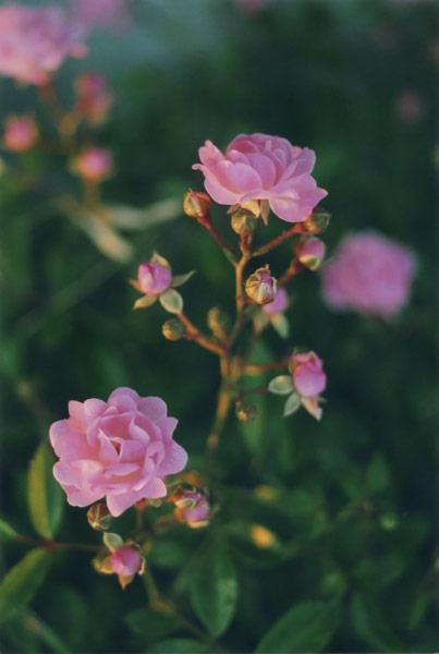 flora_111.jpg