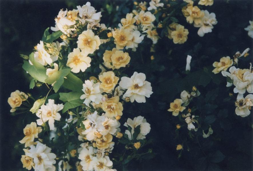 flora_141.jpg