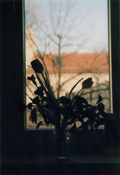 flora_171.jpg