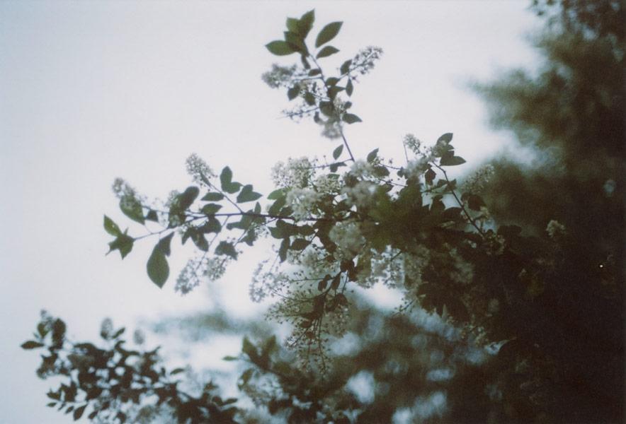 flora_181.jpg