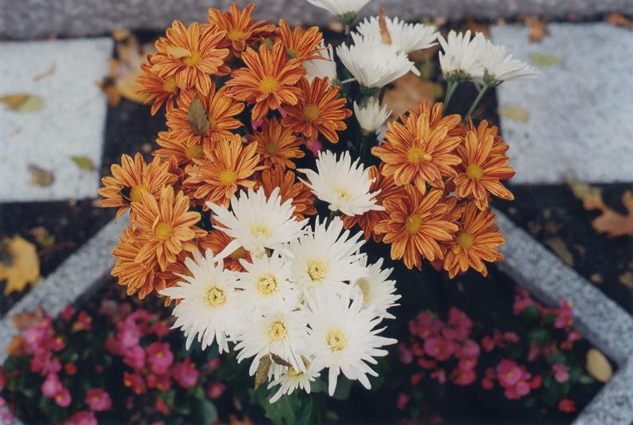flora_191.jpg
