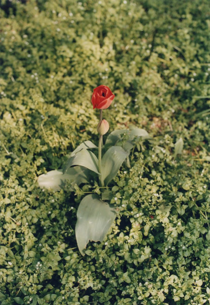 flora_211.jpg