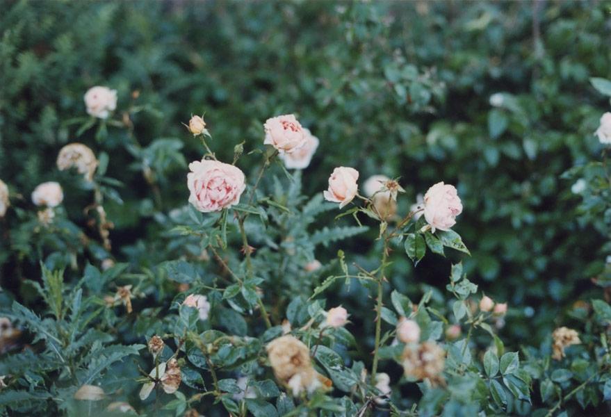 flora_221.jpg