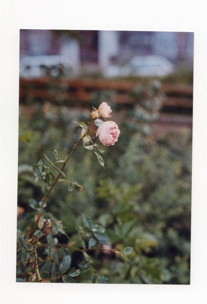 flora_241.jpg