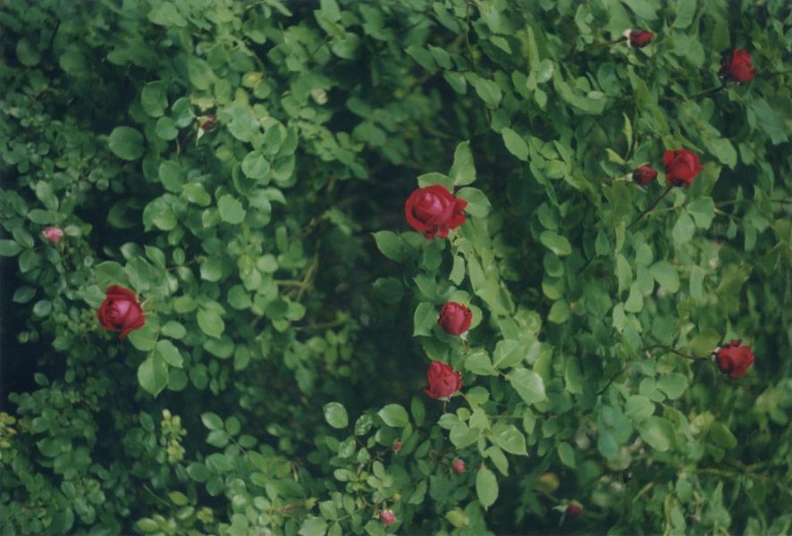 flora_271.jpg