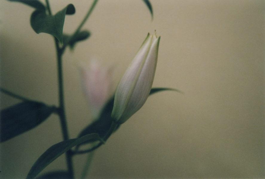 flora_291.jpg
