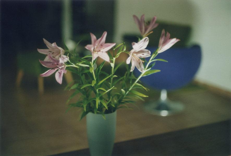 flora_301.jpg
