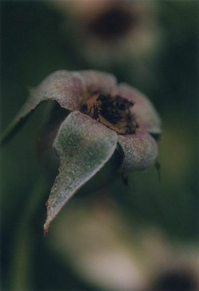 flora_331.jpg