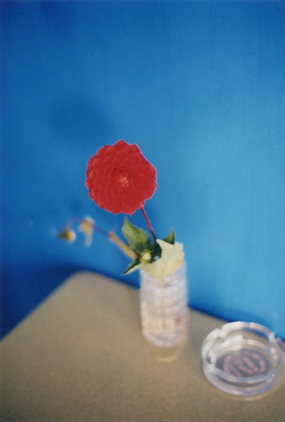 flora_351.jpg